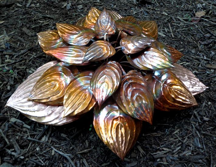 Copper Hosta