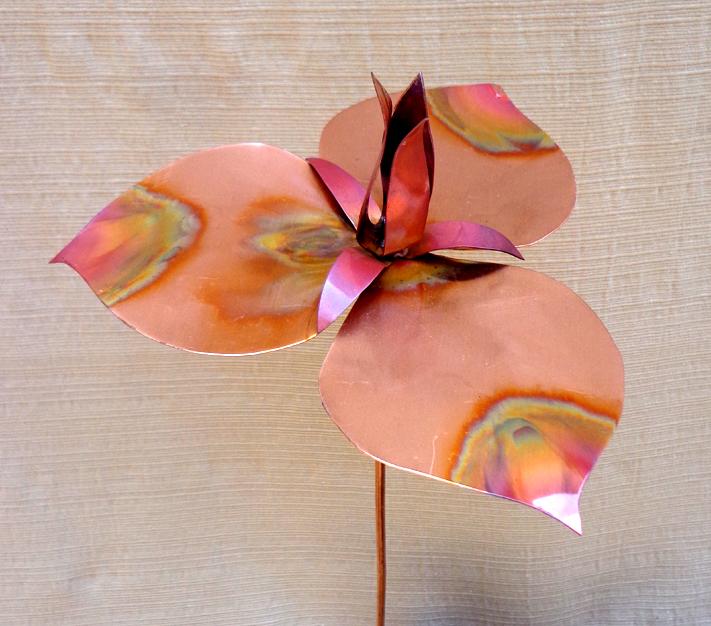 Copper Trillium